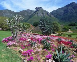 kirstenbosch-national-garden-34
